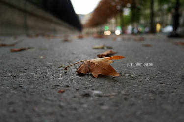 One of the many brown leaves scattered along the street